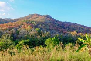 bela cena na montanha