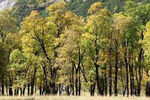 árvores de bordo durante o outono nas montanhas karwendel, tirol, áustria