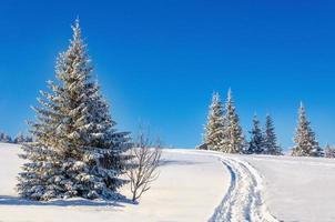 paisagem de inverno de conto de fadas com árvores cobertas de neve foto