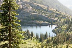 vista de pinheiros foto
