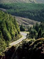 estrada de asfalto com árvores ao redor