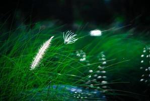 flor de grama branca de primavera foto