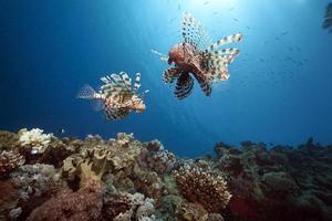 oceano, sol e peixe-leão foto