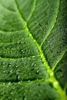 folha verde com orvalho foto