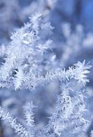 plantas congeladas foto