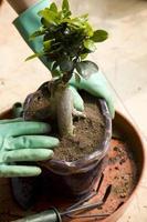 vasos de plantas foto