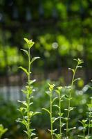 as plantas estão crescendo