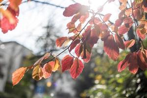 fundo de plantas de outono foto