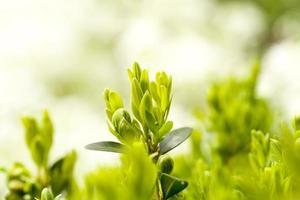 planta verde fundo de primavera foto