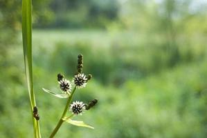 fruta de plantas selvagens foto