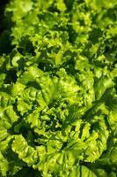 fundo de vegetais de salada foto