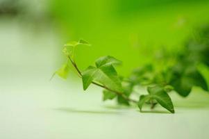 composição ecológica de planta verde foto