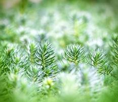 bela natureza - planta incomum foto