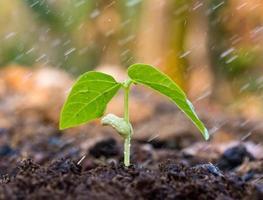 uma jovem planta verde com água
