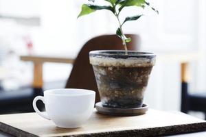 xícara de café ao lado da planta foto