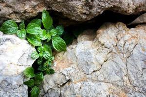 parede de pedra com planta pequena foto