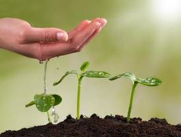 mão de uma mulher regando plantas jovens