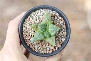 pequena planta em uma mão