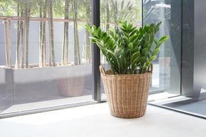 plantas decoram em garrafa de vidro foto