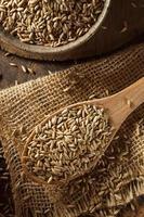 grão de centeio orgânico seco