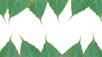 folhas verdes em fundo branco foto