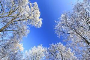 geada nas árvores em um parque foto