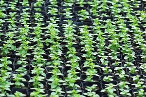 vasos de plantas verdes