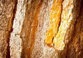 textura de árvore velha