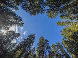 árvores da coroa