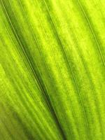 fundo de folha de planta verde frondosa