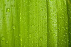 gotas de água na folha da planta verde foto