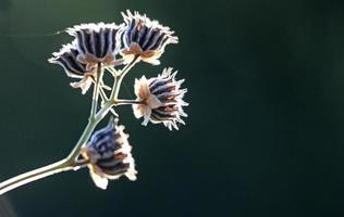 flores de planta seca contra o sol da manhã foto