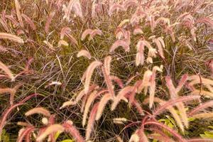 bela planta natural no parque para o fundo