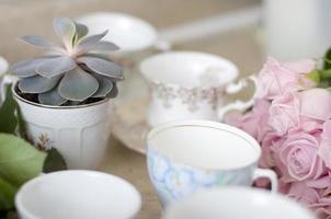 suculenta em xícara de chá foto