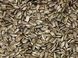 sementes de girassol pretas. foto