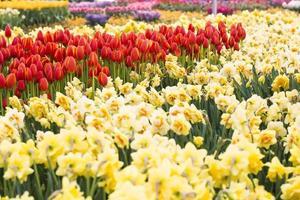 fundo de flores foto