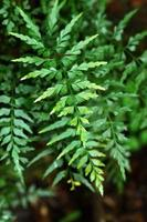 folhas de samambaia verde foto