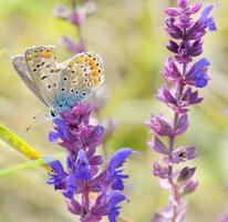 borboleta em desenho de flor rosa foto