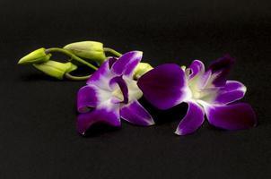 bela orquídea foto