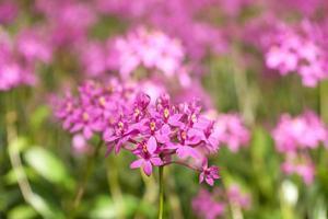 lindas orquídeas foto