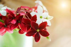 flor trepadeira de rangoon foto