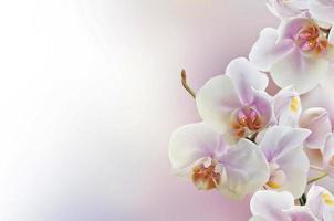 orquídeas foto