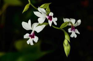 ramo de orquídea foto