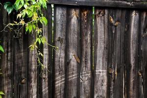 folhagem de uvas selvagens em fundo de madeira vintage com espaço de cópia foto