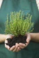 mulher segurando uma nova planta