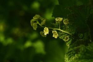 fundo em tons de planta verde foto