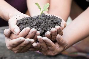 mãos em concha segurando uma planta verde