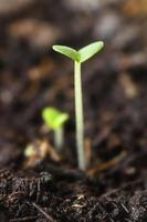 pequena planta