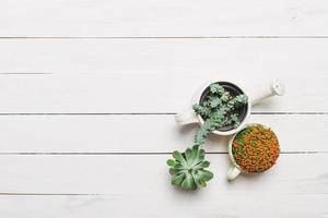 plantas suculentas em miniatura foto