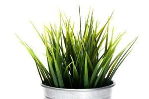 grama decorativa em vaso de flores isolado foto